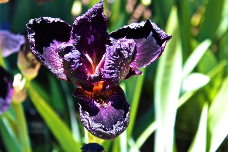 harsh purple denver
